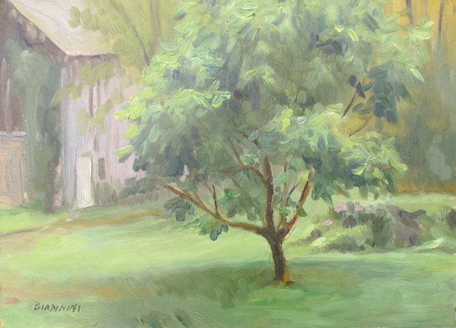 Ingrid's Tree, Massachusetts, oil, 7x10 in.