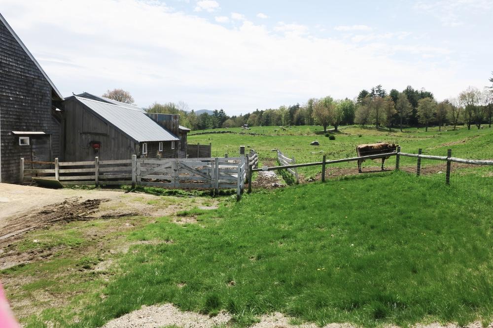 Fields at Remick farm